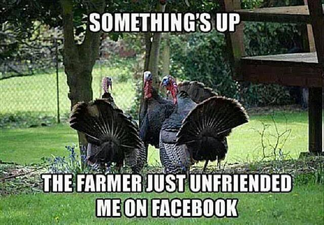 Happy Thanksgiving Meme Funny